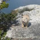 Radio dog Pete in Skagway