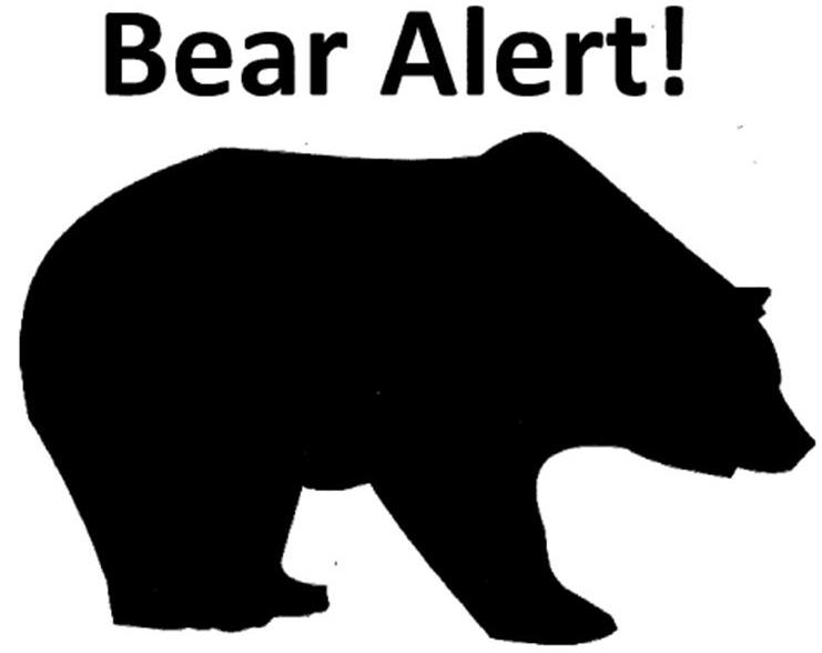 Officials warn of defensive brown bear in Haines area