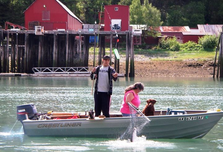 Haines king salmon derby cancelled; low run forecasted