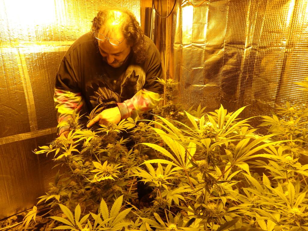 """Dean """"Bear"""" Lari grows six marijuana plants."""