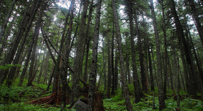 Haines State Forest (Credit: Flickr/~dgies)