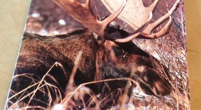 Moose hunting season starts today. (Jillian Rogers)