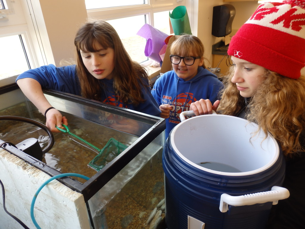 Taylor Ganey, Aubrey Cook, and Sonona Sundberg move the salmon fry from a fish tank to a cooler for transport to their release. (Emily Files)