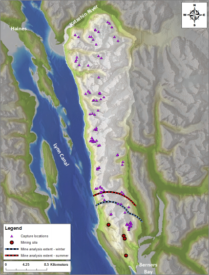 Map depicting the geographical extent of the study area. The light blue and red lines delineate the winter and summer extents used in the mine proximity analyses. The purple triangles indicate the mountain goat capture locations, and the red crosses depict mine activity sites. (ADF&G)