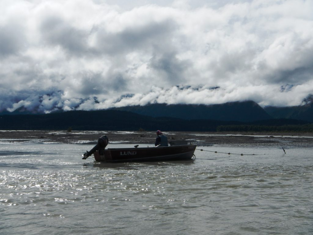 A subsistence fisherman checking his net in the Chilkat River. (Alaska Department of Fish and Game)
