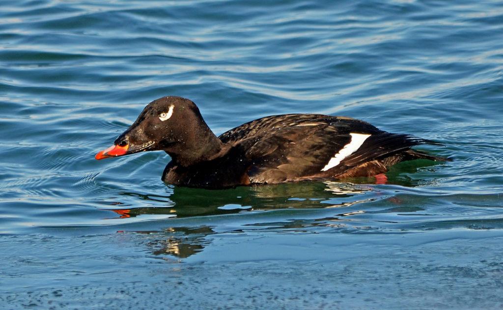Bird Migration Report