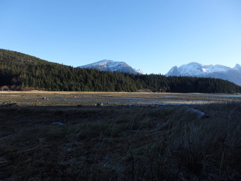 Proposed 400-acre timber sale on Chilkat Peninsula raises concerns and questions for Haines Assembly