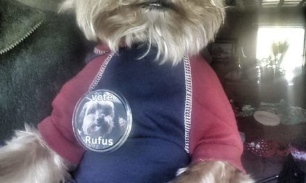 Rufus the dog campaigns in Skagway Borough Assembly election