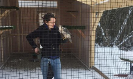 Haines American Bald Eagle Foundation completes new aviaries