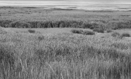 Haines photographer John Hagen wins 2nd Rasmuson award