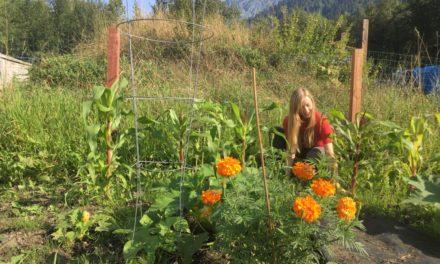 Klukwan Community Garden shares summer's harvest